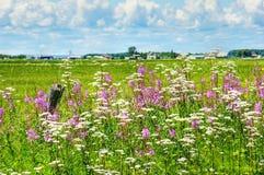 Sommerlandschaft in landwirtschaftlichem Kanada Lizenzfreies Stockfoto