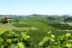 Sommerlandschaft in Langhe (Italien) Stockfoto