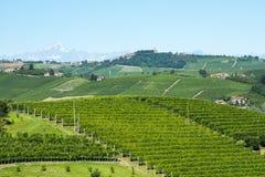 Sommerlandschaft in Langhe (Italien) Stockbild