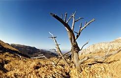 Sommerlandschaft mit alleinbaum Stockfotos