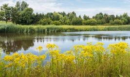 Sommerlandschaft mit blühendem Tansy Ragwort auf den Banken von Stockfotografie