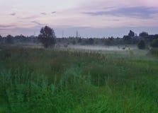Sommerlandschaft mit einem Abendnebel über einem grünen Rasen stockbild