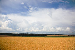 Sommerlandschaft mit einem Feld des Weizens Stockfoto
