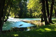 Sommerlandschaft mit einem schattigen Teich Stockbilder