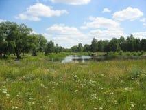 Sommerlandschaft mit einem Teich Stockbild