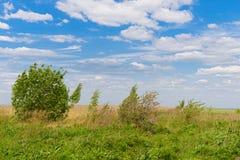 Sommerlandschaft mit einer grünen Wiese, Bäume lizenzfreie stockbilder