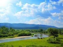 Sommerlandschaft mit Flussbergen und -pferden lizenzfreie stockfotografie