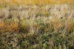 Sommerlandschaft mit goldenem gelbem Gras Lizenzfreies Stockfoto