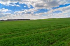 Sommerlandschaft mit grünem Gras Stockbild