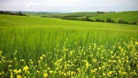 Sommerlandschaft mit grünen Hügeln in Toskana stock video footage