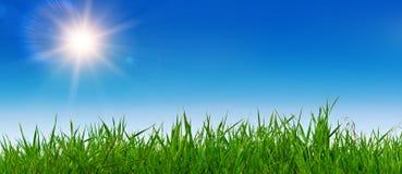 Sommerlandschaft mit Gras und sonnigem Himmel Stockfotografie