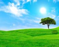 Sommerlandschaft mit Himmel, grünem Gras und Bäumen Stockfoto