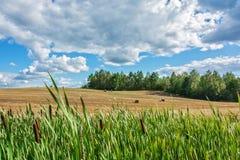 Sommerlandschaft mit ländlichem Feld, Wald und Wolken Stockbilder