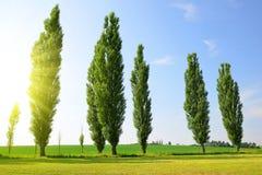 Sommerlandschaft mit Pappeln Lizenzfreies Stockbild