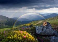 Sommerlandschaft mit Regenbogen und Blumen in den Bergen Stockbild