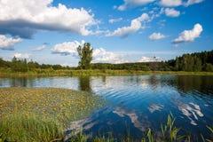 Sommerlandschaft mit Wald und See Lizenzfreies Stockbild