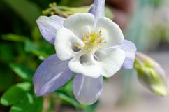 Sommerlandschaft mit wei?en Blumen lizenzfreie stockbilder