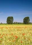 Sommerlandschaft. Mohnblumen und Bäume nach Stockfoto