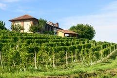 Sommerlandschaft in Monferrato (Italien) Stockfotos