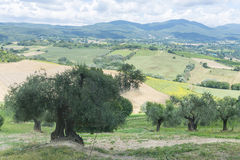 Sommerlandschaft in Umbrien (Italien) Lizenzfreie Stockfotos