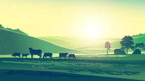 Sommerlandschaft und -kühe Lizenzfreie Stockbilder