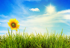 Sommerlandschaftsgrünfelder und schöner Himmel Lizenzfreie Stockfotos