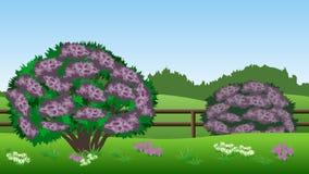 Sommerlandschaftshintergrund mit Fliederbüschen, Hügel, Gras, Stift Stockbilder