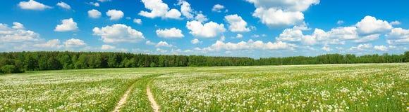 Sommerlandschaftspanorama mit blühendem Feld Stockbild