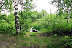 Sommerlandschaftsteich und -bäume lizenzfreies stockfoto
