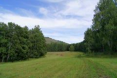 Sommerlandschaftswiese und -wald Stockbilder