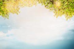 Sommerlaub über Himmelhintergrund Lizenzfreie Stockbilder