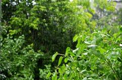 Sommerleichter regen lizenzfreies stockfoto