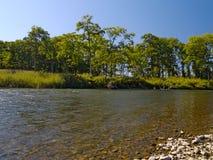 Sommermittag in dem Fluss Stockfotografie