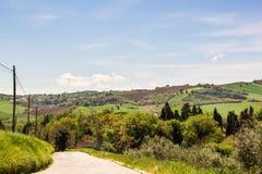 Sommermorgen auf den grünen Hügeln Lizenzfreies Stockfoto