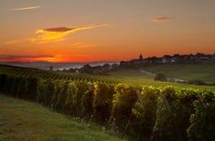 Sommermorgen in den französischen Weinbergen stockbilder