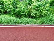 Sommermorgen nach einem grünen und roten Weg des Regens stockfoto