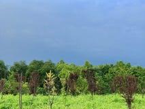 Sommermorgen nach einem Regengrün und -BLAU stockfotos