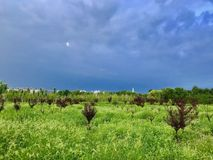 Sommermorgen nach einem Regengrün und -BLAU lizenzfreie stockfotografie