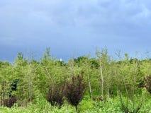 Sommermorgen nach einem Regengrün und -BLAU stockfotografie
