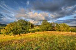 Sommernachmittag in den Wiesen stockbilder