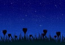Sommernachtlandschaft mit hellem blauem Himmel mit dem Glühen spielt mit Gras- und Wiesenblumen in der Wiese die Hauptrolle Schön stock abbildung