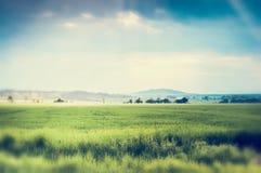 Sommernatur-Landschaftshintergrund mit grünem Feld und schönem Himmel Stockfotos