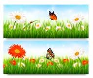 Sommernaturfahnen mit bunten Blumen Lizenzfreies Stockbild
