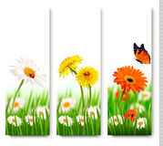 Sommernaturfahnen mit bunten Blumen und Schmetterling Lizenzfreies Stockfoto