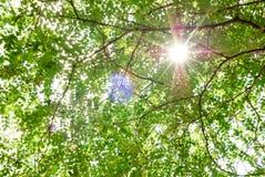 Sommernaturhintergrund mit Blättern und Sonne Stockbilder