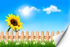 Sommernaturhintergrund mit Sonnenblume Lizenzfreies Stockbild