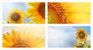Sommernetzfahne oder -hintergründe mit Sonnenblumen Stockbilder