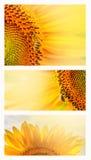 Sommernetzfahne oder -hintergründe mit Sonnenblumen Stockfotografie
