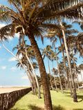 SommerPalme im Srilankanstrand Stockfoto