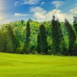 Sommerpark, Hecke, grüne Wiese und blauer Himmel stockfoto